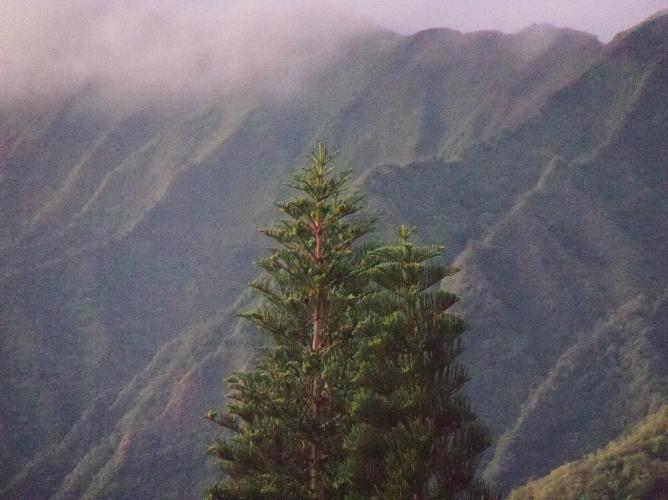 Koolau View